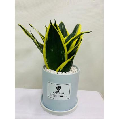 Florid Plant